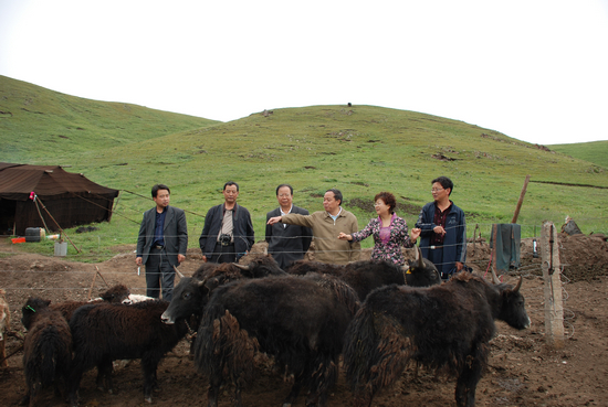 院科技扶贫作业回眸之二:心系牧民千万家  复兴藏区畜牧业