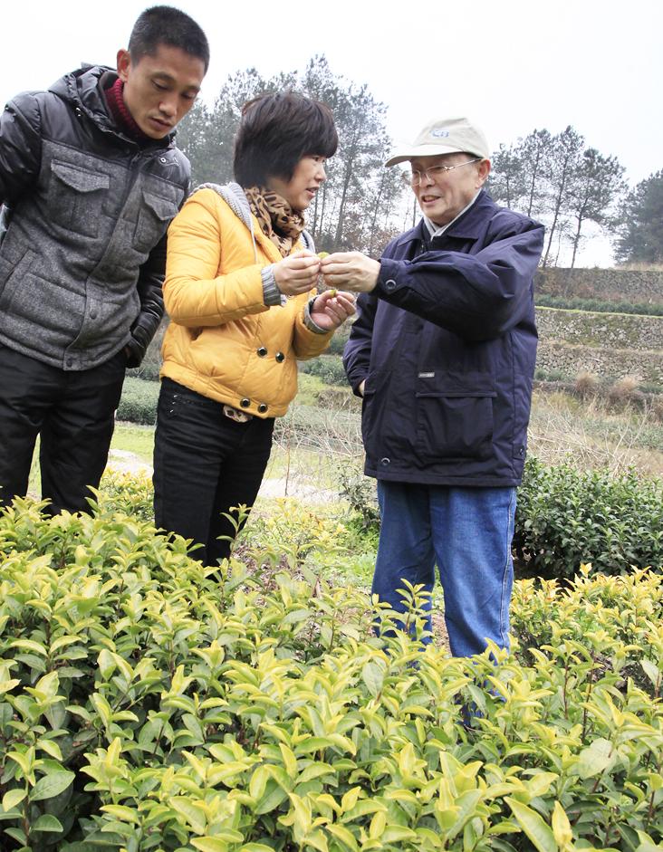 院科技扶贫作业回眸之三:服务山区茶业开展  促进茶农增产增收