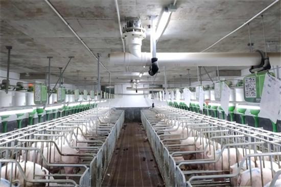 多管齐下生猪产业可持续发展