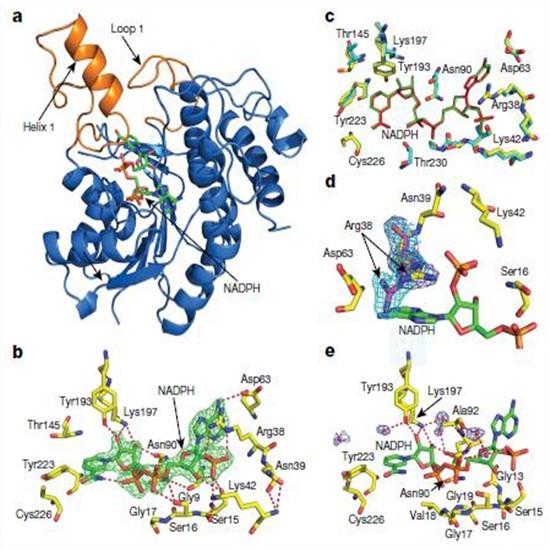 填补AG真人空白!科学家首次解析叶绿素合成关键酶3D结构